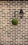 De bakstenen muur met groene haag hangt Stock Afbeelding