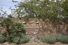 De bakstenen muur van de Kewtuin Royalty-vrije Stock Afbeelding