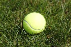 De bal van het tennis op groen gras Stock Foto