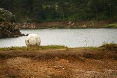 De bal van het voetbalvoetbal op groen grasgebied, meer erachter Stock Fotografie