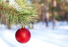 De bal van Kerstmis op pijnboomtak Stock Foto