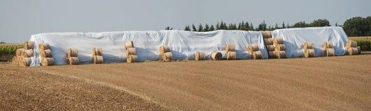 De balen van het hooi. Stock Fotografie