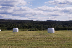De balen van het hooi Stock Foto