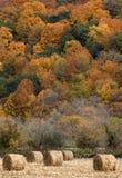 De balen van het hooi en dalingskleur Stock Foto