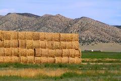 De balen van het hooi in Landelijk Idaho Stock Afbeelding