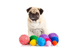 De ballen van de honddraad op witte achtergrond worden geïsoleerd die Royalty-vrije Stock Fotografie