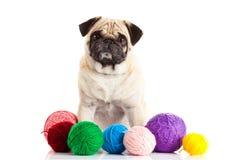 De ballen van de honddraad op witte achtergrond worden geïsoleerd die Stock Fotografie