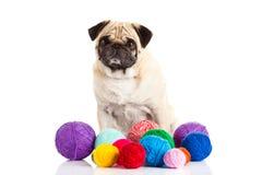 De ballen van de honddraad op witte achtergrond worden geïsoleerd die Royalty-vrije Stock Foto