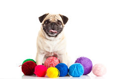 De ballen van de honddraad op witte achtergrond worden geïsoleerd die Stock Afbeeldingen