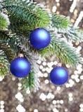 De ballen van het donkerblauwe Nieuwjaar op een snow-covered tak. Het stilleven van het nieuwjaar Royalty-vrije Stock Afbeelding