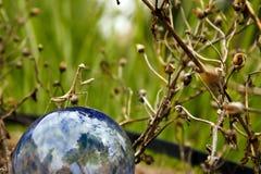 De Ballon van bidsprinkhanen Royalty-vrije Stock Afbeelding