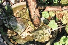 De bamboebuis heeft water die door de gootsteen vloeien stock foto's