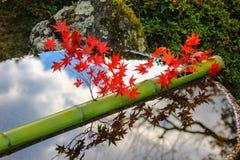 De bamboebuis op een water met rood doorbladert hierboven Stock Foto