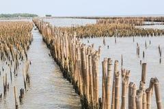 De bamboeomheining beschermt zandbank tegen overzeese golf Stock Foto