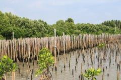De bamboeomheining beschermt zandbank tegen overzeese golf Stock Afbeelding