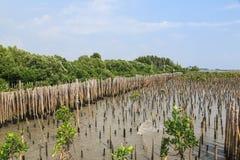De bamboeomheining beschermt zandbank tegen overzeese golf Royalty-vrije Stock Afbeelding