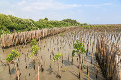 De bamboeomheining beschermt zandbank tegen overzeese golf Stock Fotografie