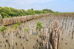 De bamboeomheining beschermt zandbank tegen overzeese golf Royalty-vrije Stock Fotografie