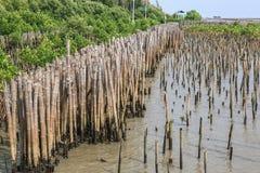 De bamboeomheining beschermt zandbank tegen overzeese golf Stock Foto's