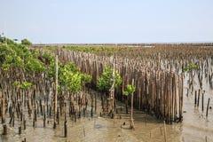 De bamboeomheining beschermt zandbank tegen overzeese golf Royalty-vrije Stock Foto