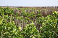 De bamboeomheining beschermt zandbank tegen overzeese golf Stock Afbeeldingen