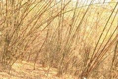 De bamboewildernis droogt Royalty-vrije Stock Foto's