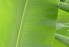De banaan verlaat dicht omhoog beeld, met regendalingen Royalty-vrije Stock Foto