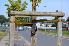De band van de boom Stock Fotografie