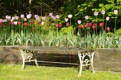 De bank en de tulpen van de tuin royalty-vrije stock foto's