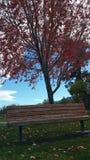 De bank van het park in de herfst Royalty-vrije Stock Afbeeldingen