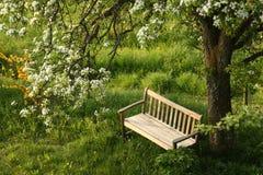 De bank van het park onder tot bloei komende boom Royalty-vrije Stock Afbeeldingen