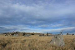 De Bankenschiereiland van boomstompen, Nieuw Zeeland Stock Fotografie