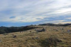 De Bankenschiereiland van boomstompen, Nieuw Zeeland Stock Afbeelding