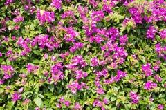 De Banner van bloemen Background Stock Afbeelding