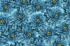 De Banner van bloemen Background Turkooise bloemenchrysant Close-up bloemencollage De samenstelling van de bloem Royalty-vrije Stock Afbeeldingen