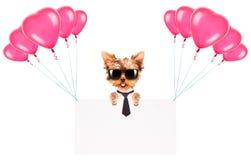 De banner van de bedrijfshondholding met ballons Royalty-vrije Stock Foto's