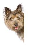 De banner van de hond Stock Foto