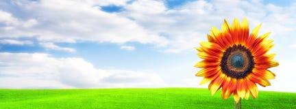 De banner van de zonnebloem Stock Fotografie