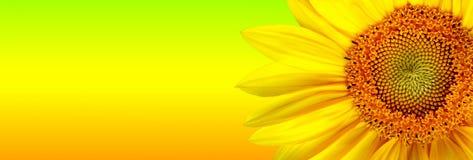 De banner van de zonnebloem royalty-vrije illustratie