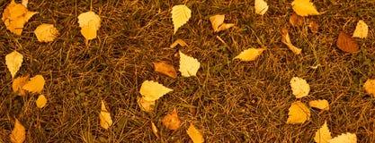 De banner van de herfst eps10 Gele bladeren Stock Fotografie