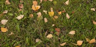 De banner van de herfst eps10 Gele bladeren Stock Afbeeldingen