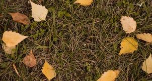 De banner van de herfst eps10 Gele bladeren Stock Foto