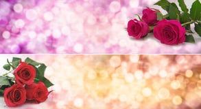 De Banner van rozenbokeh Stock Foto's