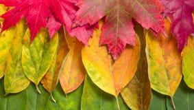 De bannerachtergrond van de herfst Stock Afbeeldingen