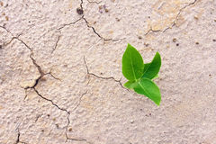 De barst van een droog klimaat en een gebrek aan water. royalty-vrije stock foto