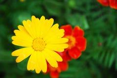 De basis van de Flowerlyprentbriefkaar Stock Afbeeldingen