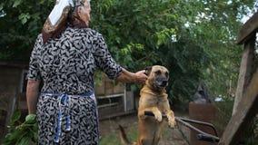 De bastaard op een ketting, de hond bevindt zich op zijn achterste benen, met zijn voorbenen die op een kruiwagen rusten De hond  stock videobeelden