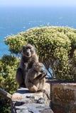 De baviaan van de moeder en van de Baby Royalty-vrije Stock Foto