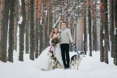 De beaux jeunes mariés avec le chien de traîneau deux sibérien sont posés sur le fond de l'illustration neigeuse de forêt Photo libre de droits