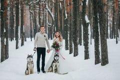 De beaux jeunes mariés avec le chien de traîneau deux sibérien sont posés sur le fond de l'illustration neigeuse de forêt Images libres de droits